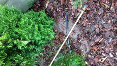 Lodowa kula spadła do ogródka (Marcin Czuba)