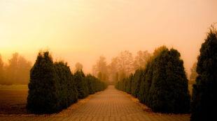 Prognoza pogody na dziś: gęste mgły nad Polską, ale się wypogodzi