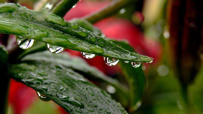 Pogoda na dziś: opady będą zanikać