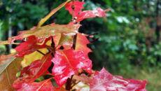 Jesienne barwy na liściach